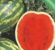 Семена арбуза Кримсон свит 20 шт.