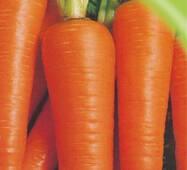 Семена моркови Витаминная 6 2000 шт.