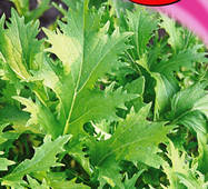 Семена салата Мизуна зеленый 1 г
