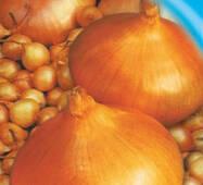Семена лука репчатого Марковский 200 шт.
