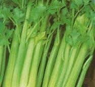 Семена сельдерея листового (имп.)