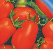 Семена томатов Рома 30 шт.