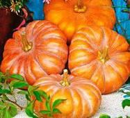 Семена тыквы Медовая красотка