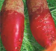 Семена свеклы кормовой Киевская розовая 100 г