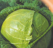 Семена капусты белокачанной Золотой гектар120 шт.