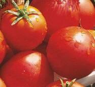 Семена томатов Балада