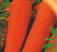 Семена моркови Королева осени 2000 шт.