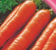 Семена моркови Коралл 2000 шт.