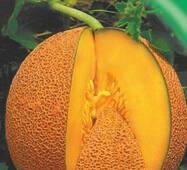 Семена дыни Медовый аромат 10 шт.