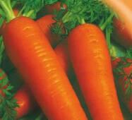 Семена моркови Лосиноостровская 2000 шт.