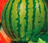Семена арбуза Волшебник