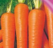 Семена моркови Аленка 20 г