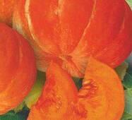 Семена тыквы Руж виф Дэтамп