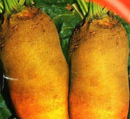 Семена свеклы кормовой Урсус 30 г