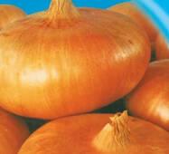 Семена луки Штудгартен ризен 200 шт.