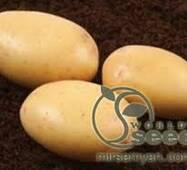 Картопля Нектар