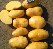 Картофель Гренада (ІКР-130-6) за 6 кг