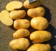 Картофель Гренада (ІКР-130-2) за 2 кг