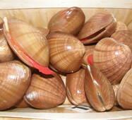 Морепродукты - Моллюски Фасолари