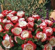 Саженцы роз Ностальжи