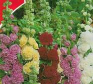 Семена цветов Мальва Садовая махровая высокая смесь, 0.3 гр