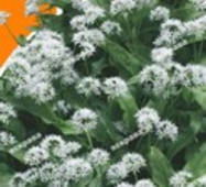 Семена Черемша, 0.2 гр