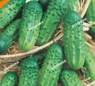 Насіння огірка пч. Малюк, 1 гр