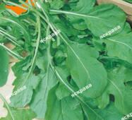 Семена Руккола , 1 гр