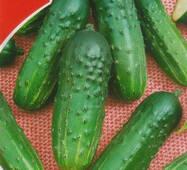 Насіння огірка пч. Фенікс, 1 гр