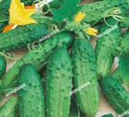 Насіння огірка пч. Алладін, 0.5 гр