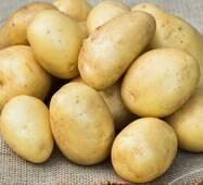 Картофель Ривєра по 6 кг (ІКР-16-6)