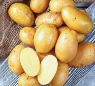Картофель Королева Анна по 6 кг (ІКР-37-6)