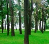 Насіння тіньовий газон, 1кг