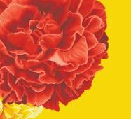Схема для вышивки бисером Барвиста Вышиванка Роскошные желто-красные пионы 58х58 (ТК078ан5858)