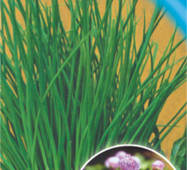 Семена луки Шнитт 150 шт.