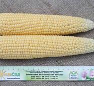 Кукуруза Иллинойс за 50 сем. (ЕКК-56М)