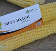 Кукуруза Мегалодон за 50 сем. (ЕКК-54М)