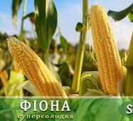 Кукуруза сахарная Фиона F1 за 200 сем. (ЕКК-50А)