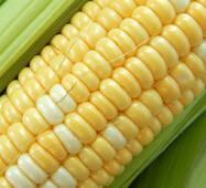 Кукуруза сахарная Биколор (ЕКК-53М) за 50 сем.