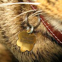 Жетоны для собак и кошек, адресник, фото