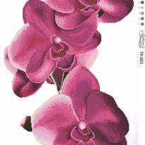 Квіти, натюрморти.
