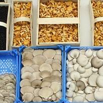 Свіжі гриби