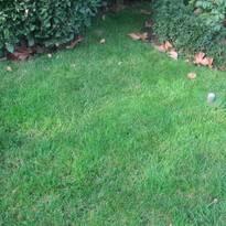 Травяной газон - продажа семян газонных трав