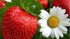 Свіжі ягоди і фрукти в будь-яку пору року!