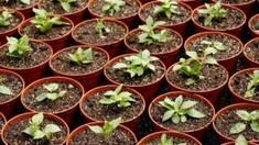 Поради досвідченого садівника або як я навчився вибирати горщики для розсади