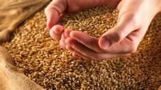 Забезпечте збереження свого врожаю за допомогою надійного зерносховища