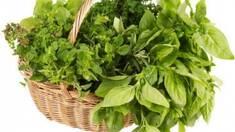 Найкраща зелень оптом з Ізраїлю як невід'ємний інгредієнт у кухнях всього світу!