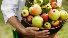 Купуйте яблука оптом з нашого саду! Секрети успішного фруктового бізнесу
