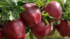 А ви знаєте, як створити ідеальний сад? Купити саджанці яблуні у ТМ «СонцеСад»