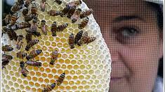 Пчеловодство (история)
